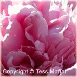 Visit Tess' Photography Online!